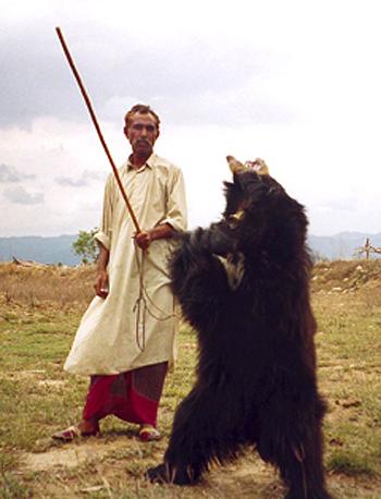 bear-dancing_240