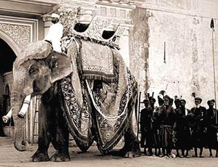 ehr_elephant1