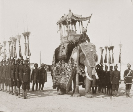 elephants-lg
