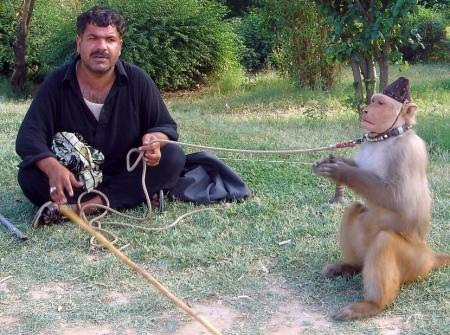 monkey-2357505558_3611482350_b